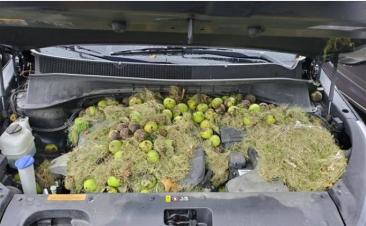 O seu carro tem um cheiro estranho? Talvez alguém o esteja a utilizar como armazém
